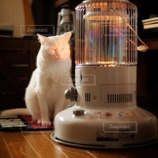 暖をとる猫の写真・画像素材[4022621]