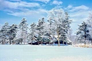 冬の農場の写真・画像素材[4134347]