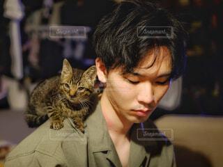 迷子の子猫の写真・画像素材[4228688]