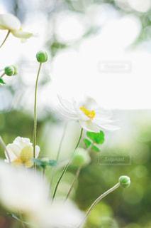 花咲く💐の写真・画像素材[2645923]