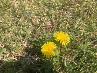 花の写真・画像素材[595381]