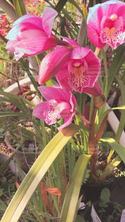 ピンクの花で満たされた花瓶の写真・画像素材[3061133]
