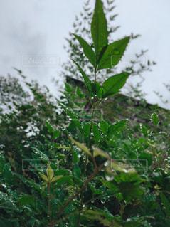 雨,庭,緑,外,雫,梅雨