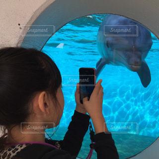イルカ,水族館,スマホ,人物,写真,スマホいじり,写メ,ハイチーズ