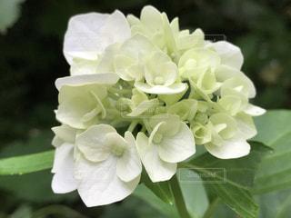 近くの花のアップの写真・画像素材[913007]