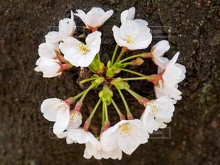 花の写真・画像素材[418487]