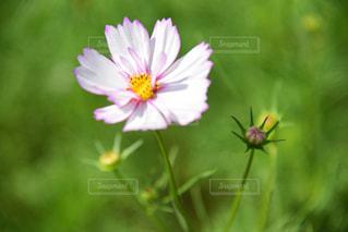 近くの花のアップの写真・画像素材[1513249]