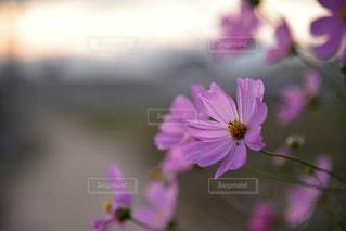 近くの花のアップの写真・画像素材[1513276]