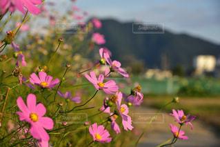 近くの花のアップの写真・画像素材[1513294]