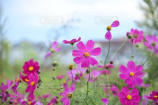 近くの花のアップの写真・画像素材[1513838]