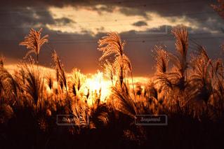 自然,風景,空,秋,雲,夕暮れ,ススキ,秋空,岐阜市内