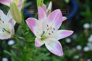 近くの花のアップの写真・画像素材[1801504]