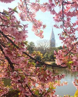 春の写真・画像素材[401617]
