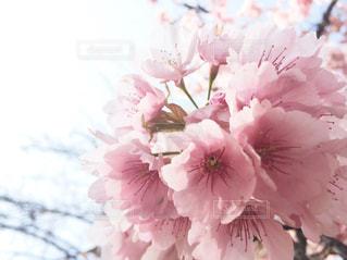 春 - No.404968