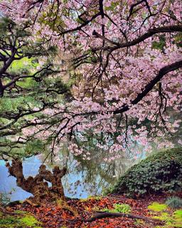 春の写真・画像素材[404977]