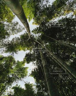 京都 - No.475148