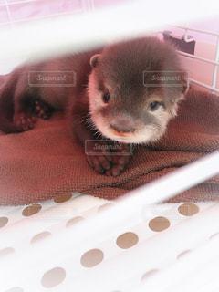 ベッドの上に座っている齧歯動物 - No.750773