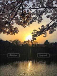 桜と大阪城。 - No.1139860