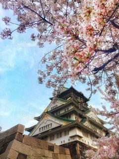 桜と大阪城。 - No.1139862