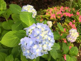 花の写真・画像素材[543030]