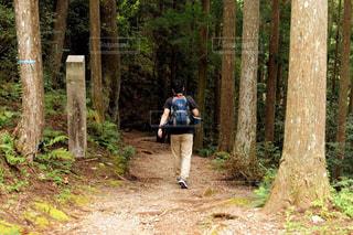 先に山道に入っていく少年の写真・画像素材[767231]