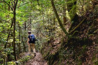 森の人々 のグループの写真・画像素材[767232]