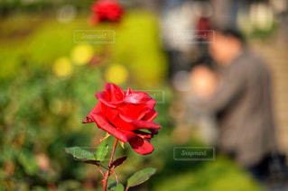 植物にピンクの花の写真・画像素材[1128552]
