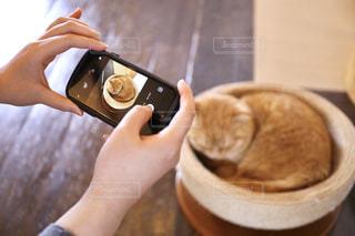 お昼寝中のネコの写真・画像素材[2283385]