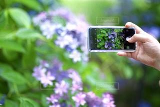携帯電話を持つ手の写真・画像素材[2283394]