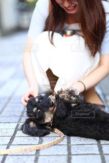 犬を触る女性の写真・画像素材[2286666]