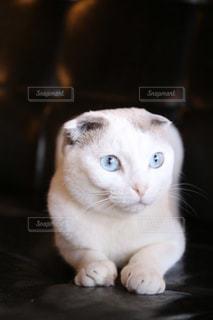 猫のクローズアップの写真・画像素材[2293005]