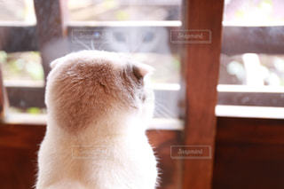 窓の前に座っている猫の写真・画像素材[2293009]