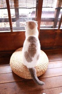 窓の前に座っている猫の写真・画像素材[2293018]