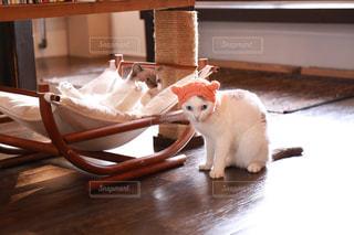 帽子を被った猫の写真・画像素材[2293028]