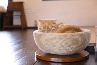 眠っている猫の写真・画像素材[2293030]