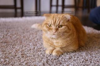 敷物の上でくつろぐ猫の写真・画像素材[2293038]