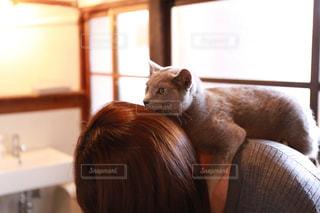 人の背中でくつろいでいる猫の写真・画像素材[2293049]