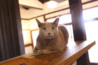 木製の棚の上に座っている猫の写真・画像素材[2293052]