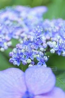 花のクローズアップの写真・画像素材[3375617]