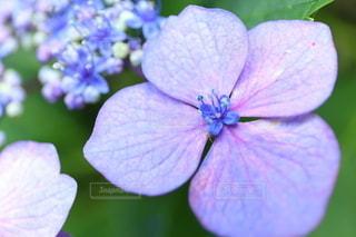 花のクローズアップの写真・画像素材[3375624]