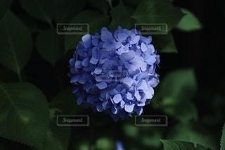 花のクローズアップの写真・画像素材[3375620]