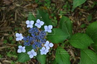 花園のクローズアップの写真・画像素材[3375664]