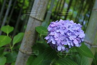花のクローズアップの写真・画像素材[3375715]