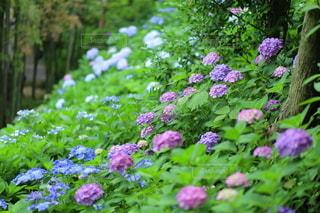 花園のクローズアップの写真・画像素材[3375716]
