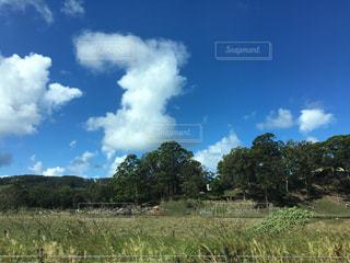 背景の木と大規模なグリーン フィールドの写真・画像素材[1131668]
