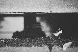 鳥の黒と白の写真の写真・画像素材[779295]