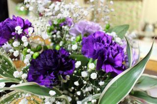 花の写真・画像素材[485566]