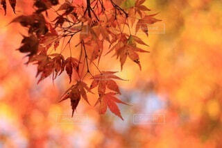 秋色に包まれての写真・画像素材[3836582]