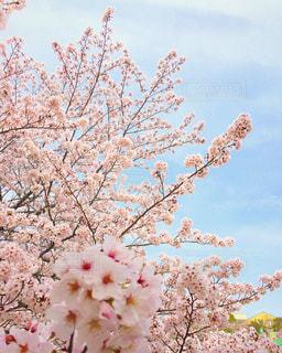 春 - No.424469