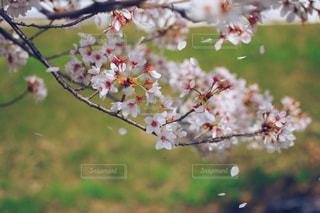 花にとまる小鳥の写真・画像素材[1132526]